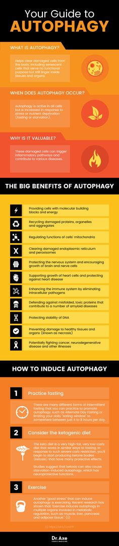 The 2016 Nobel Prize in Physiology or Medicine was awarded to Yoshinori Ohsumi for his discoveries of mechanisms for AUTOPHAGY. Learn more about , prolonged and intermittent fasting benefits with this infographic. Calendula Benefits, Matcha Benefits, Coconut Health Benefits, Fat Bombs, What Is Autophagy, Nobel Prize In Physiology Or Medicine, Health And Wellness, Health Tips, True Health