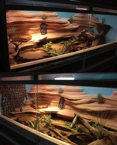 my first terrarium for a bearded dragon :3