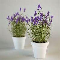Ervas e plantas medicinais que você pode plantar em casa