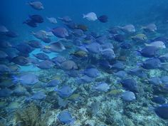 How many different kinds of fish can you count? We see three! Marine Conservation, Fiji, Seychelles, Scuba Diving, Kenya, United Kingdom, Count, Thailand, Mexico