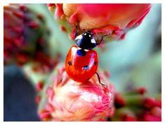 ladybug adventures by xxemoxxstarxx