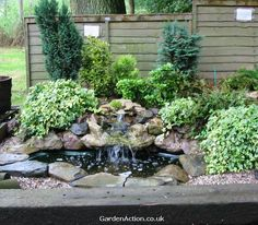 garden photos with water feature  on www.gardenaction.co.uk