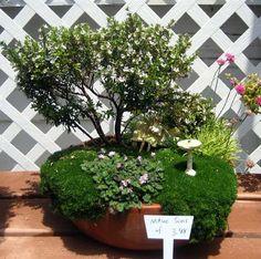Fairy Garden in a Pot 3   Flickr - Photo Sharing!