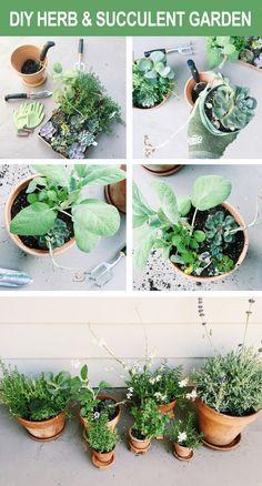 DIY Herb & Succulent Garden.