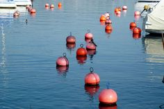 the buoys are back2