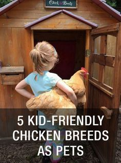 Top 5 Best Kid-Friendly Chicken Breeds As Pets: http://www.mychickencoop.net/top-5-best-kid-friendly-chicken-breeds-pets/