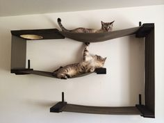 I just adore these cat shelves! They're like art for you and a jungle gym for your cats! :)  Handmade Unique: Unique for You and Your Cat : Modern, Sculptural Cat Shelves by CatastrophiCreations - Grand Rapid, Michigan  http://handmadeunique.blogspot.com/2014/08/unique-for-you-and-your-cat-modern.html