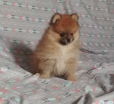 Petra Best Small Family Dogs, Puppies For Sale, Cute Puppies, Teacup Puppies, Maltipoo, Petra, Animals, Maltipoo Dog, Animales