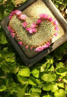 Home | Creative Cacti and Succulents at Geffray's Garden in Chico, CA