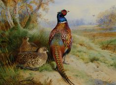 Cock and Hen Pheasant at the Edge of a Wood by Archibald Thorburn  (1860-1935)