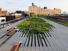 High Line on Architecture Served