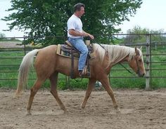 This western pleasure mare is looking for a new rider, see her ad on Equine.com: http://www.equine.com/horses-for-sale/horse-ad-3661624.html