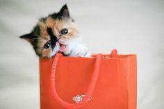 Kitty    Je veux le même.