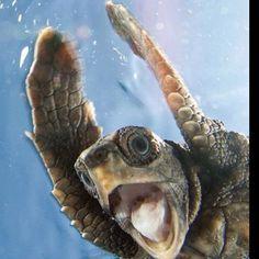Hands up, baby, hands up...