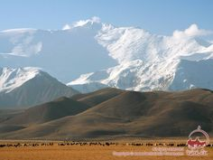 The Alay Valley Picturesque alpine pastures against the background of permanent snow.