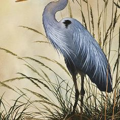 The beauty and grace of a Great Blue Heron standing in tall grass along a driftwood shore. Recreated as a fine art image by Fine Art America from an original watercolor by artist James Williamson. Driftwood Shores, Flying Bird Silhouette, Blue Heron, Wire Art, Fine Art America, Watercolor Paintings, Sculptures, Fine Art Prints, Nature