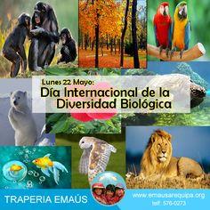 ¿Por qué un Día Internacional para la Diversidad Biológica? la diversidad biológica en un bien mundial de gran valor para las generaciones presentes y futuras, el número de especies disminuye a un gran ritmo debido a la actividad humana. #cuidaelplaneta Telf: (01) 576 0273 / RPC: 943518300 / #951401882 www.emausarequipa.org
