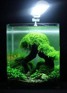 25 Simple and Sophisticated Aquascaping Ideas. Planted Aquarium, Aquarium Terrarium, Nature Aquarium, Aquarium Fish, Aquarium Landscape, Aquascaping, Betta Fish Tank, Fish Tanks, Nano Cube
