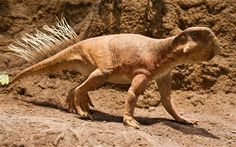 Dinosaurs crawled on all fours like toddlers before switching to two feet when they grew up, experts have discovered.