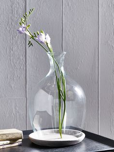 Glass Plant Cloche from cox and cox ...