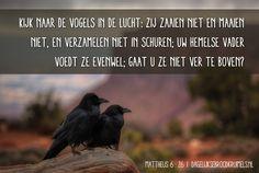 Kijk naar de vogels in de lucht: zij zaaien niet en maaien niet, en verzamelen niet in schuren; uw hemelse Vader voedt ze evenwel; gaat u ze niet ver te boven? Matthëus 6:26 #DeVader http://www.dagelijksebroodkruimels.nl/mattheus-6-26/