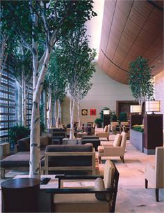 Lobby with birch trees