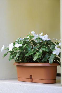 Arrotondate ed aggraziate, le fioriere Superpiera, Piera e Pierina sono versatili nell'uso grazie al sottovaso incorporato: eleganti all'interno e pratiche all'esterno.