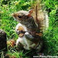 Funny Squirrels - Funny Squirrel Picture 45 (FunnyPica.com)