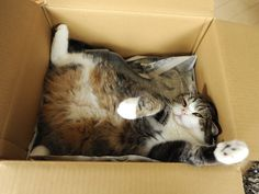 the cardboard box ~ God's divine gift to kitties