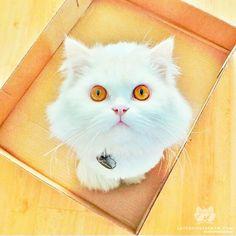 """This is Fisher. The cat mischievous ❤️"" #catsofinstagram"