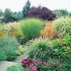 Solve a Slope - As the path continues through a more open, sunny section of the yard that slopes down, ornamental grasses continue to play a starring role in the plant palette. Dwarf 'Hameln' fountaingrass in the foreground explodes with texture and is surrounded by pink heather, a rose-color chrysanthemum, and a pink lacecap hydrangea. Across the pathway, lavender and black-eyed Susans lead to a clump of maidengrass and 'Yaku Jima' miscanthus
