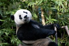 """Yun Zi Male Model"""