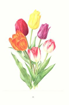 1972 Vintage tulip print spring flowers watercolor French decor botanical poster vintage print