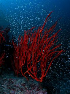 whip-coral-1 by Liquid Lense, via Flickr