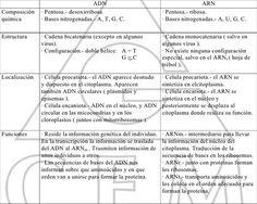 Cuadro Comparativo De Diferencias Entre Adn Y Arn