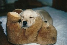 Dogs and Puppies - Caring For Your Dog Doesn't Have To Be Hard. Check Out These Easy Tips! *** Read more details by clicking on the image. Puppy Pictures, Dog Photos, Animal Pictures, Cute Puppies, Cute Dogs, Dogs And Puppies, Doggies, Bear Dogs, Golden Retrievers