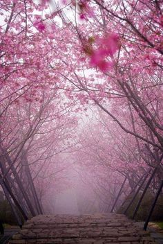 Cherry Blossom Bridge, Japan  The pink haze that signals new life vs. the red mist that speaks of Ellie's death