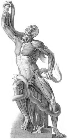 Músculos Laoconte