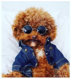 Get Your Dog Trained Today With These Simple Tips Super Cute Puppies, Baby Animals Super Cute, Cute Baby Dogs, Cute Little Puppies, Cute Funny Dogs, Cute Dogs And Puppies, Cute Little Animals, Cute Funny Animals, Cute Babies