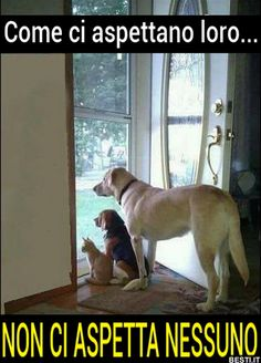 Dog Training Videos Tools - Dog Training Obedience Border Collie - - Service Dog Training Ideas - Dog Training Tips - Dog Training Tips What To Do Love Pet, I Love Dogs, Cute Dogs, Animals And Pets, Funny Animals, Cute Animals, Peyton List, Oklahoma, Verona