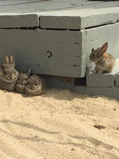 Animals And Pets, Baby Animals, Funny Animals, Cute Animals, Rabbit Life, Pet Rabbit, Ruby Rabbit, Rabbit Food, Cute Baby Bunnies