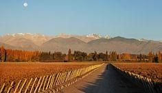 Entre Cielos Wine Resort: Beneath the snowcapped Andes, Mendoza's Entre Cielos is a new, starkly modern wine retreat.