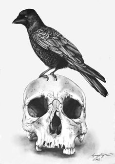 Skull with Raven Art Print Click through to Society6 print store. DO NOT REMOVE CREDIT art, drawing, sketch, pencil, illustration, realistic, realism, skull, skulls, black and grey, detailed, horror, anatomy, lynsey hayton art.