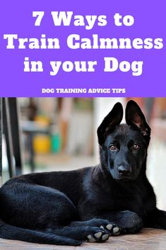 7 Ways to Train Calmness in your Dog. - 7 Ways to Train Calmness in your Dog Service Dog Training, Service Dogs, Training Your Dog, Training Tips, Hyper Dog, Dog Commands, Dog Care Tips, Pet Tips, Pet Care