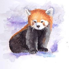 red panda drawing
