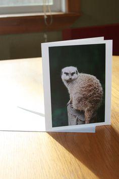Meerkat Photo Greeting Card blank inside by Creativitude on Etsy, $4.00
