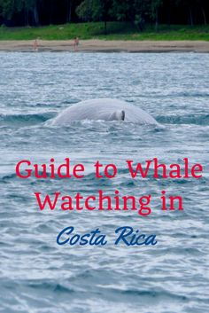 Guide to whale watching in Costa Rica. When is the best time, what species will you see and where is the best place to see them.