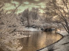 Cherry blossoms japanese garden missouri by FengShuiPhotography