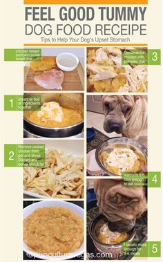 Dog's got a tummy bug? Try pumpkin - it's really soothing for sensitive tummies. Check out this easy recipe I found from another pinner.