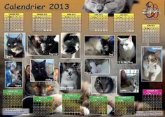 Chat Web, Cat Calendar, Spa, Photo Wall, Cats, Frame, Picture Frame, Photograph, Gatos